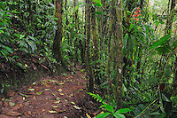 Rainforest trail,Milpe Bird Sanctuary, Ecuador, Andes, South America