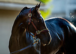 April 27, 2021: Rock Your World gets a bath after galloping at Churchill Downs in Louisville, Kentucky on April 27, 2021. EversEclipse Sportswire/CSM