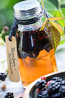 Brombeer-Balsamico, Brombeer-Essig, Brombeerbalsamico, Brombeeressig, Brombeeren werden in Balsamico, Essig, Balsamico-Essig, Balsamessig eingelegt, Brombeere, Brombeeren, Beeren, Früchte, Frucht, Echte Brombeere, Rubus fruticosus agg., Rubus sectio Rubus, Rubus fruticosus, blackberry, bramble, fruit, Balsamic vinegar, aceto balsamico, balsamic, ronce