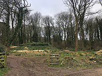 BNPS.co.uk (01202 558833)<br /> Pic: LParchitects/BNPS<br /> <br /> Woodland surrounding the bunker<br /> <br /> A windowless Second World War bunker is set to be transformed into a coastal holiday home.<br /> <br /> The concrete bunker was built into the cliff at Ringstead Bay in Dorset and formed part of an RAF radar station to detect German Luftwaffe.<br /> <br /> The building is almost invisible from the outside, camouflaged into the landscape thanks to overgrown foliage and vegetation.