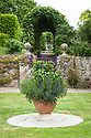 Terracotta container planted with Salvia 'Amistad' on the East Lawn, Town Place, late June.