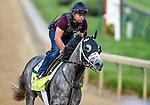 LOUISVILLE, KY - MAY 02: Destin, trained by Todd Pletcher and owned by Twin Creeks Racing Stables, LLC, exercises and prepares during morning workouts for the Kentucky Derby and Kentucky Oaks at Churchill Downs on May 2, 2016 in Louisville, Kentucky. (photo by John Voorhees/Eclipse Sportswire/Getty Images)