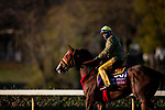 November 2, 2020: Big Runnuer, trained by trainer Victor Garcia, exercises in preparation for the Breeders' Cup Turf Sprint at Keeneland Racetrack in Lexington, Kentucky on November 2, 2020. Alex Evers/Eclipse Sportswire/Breeders Cup