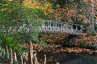 France, Allier (03), Villeneuve-sur-Allier, Arboretum de Balaine en automne, passerelle et racines aériennes ou pneumatophores de cyprès chauve (Taxodium distichum)