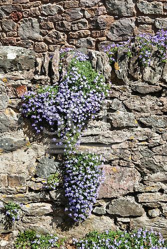 East Ogwell, Devon, England. Flowers on stone wall shaped like the Americas.