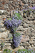 East Ogwell, Devon, England. Flowers on stone wall shaped like the Americas.