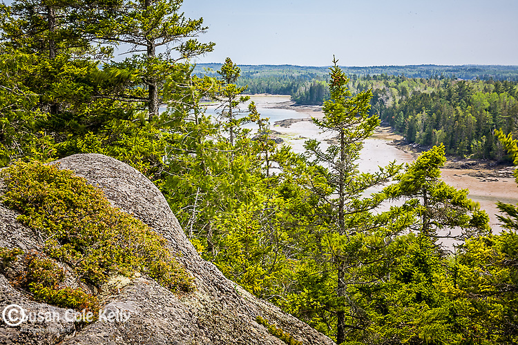 Burnt Cove overlook, Cobscook Bay State Park, ME, USA