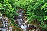 France, Nièvre (58), parc naturel régional du Morvan, Gouloux, la Cure