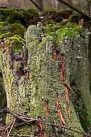 Moss covered tree stump