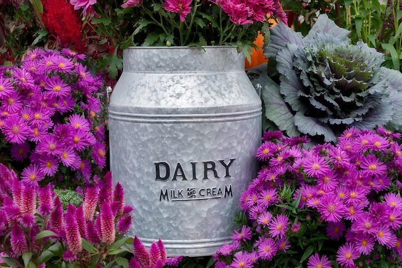 Milk jug and mum flowers display