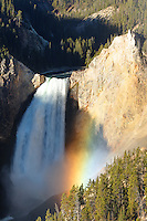 Rainbow and Lower Falls of the Yellowstone River viewed from Lookout Point, Grand Canyon of the Yellowstone, Yellowstone National Park, Wyoming, USA
