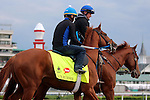 LOUISVILLE, KY - MAY 04: Gun Runner (Candy Ride x Quiet Giant, by Giant's Causeway) is led on the track at Churchill Downs, Louisville KY, to prepare for the Kentucky Derby. Owner Winchell Thoroughbreds LLC and Three Chimneys Farm, trainer Steven M. Asmussen. (Photo by Mary M. Meek/Eclipse Sportswire/Getty Images)