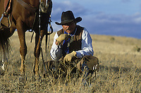Cowboy kneeling in front of horse. Ponderosa Ranch. Senaca OR.