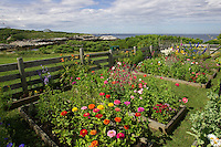 Celia Thaxter's recreated garden on Appledore Island, Isles of Shoals.. .Photograph by Peter E. Randall