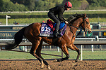 ARCADIA, CA  OCTOBER 30: Breeders' Cup Juvenile Turf Sprint entrant Alligator Alley, trained by Joseph O'Brien, exercises in preparation for the Breeders' Cup World Championships at Santa Anita Park in Arcadia, California on October 30, 2019. (Photo by Casey Phillips/Eclipse Sportswire/CSM)