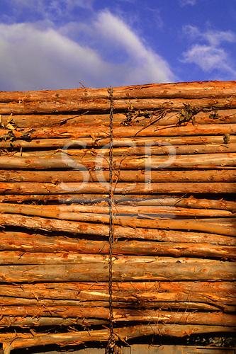 Espirito Santo State, Brazil. Trunks of eucalyptus tree held together with a chain; Aracruz plantation.