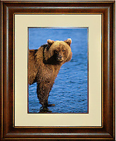 """Brown Bear<br /> Image Size:  14"""" x 20""""<br /> Finished Frame Dimensions:  26"""" x 32""""<br /> Quantity Available: 1"""