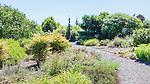 Garden Path with  gravel surface in Tacoma, WA public utility environmental display garden.  At the Tacoma  Envirohouse.