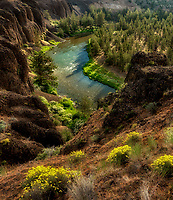 Crooked River gorge with wildflowers. Oregon