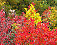Fall color at Stateline Overlook; Breaks Interstate Park, KY