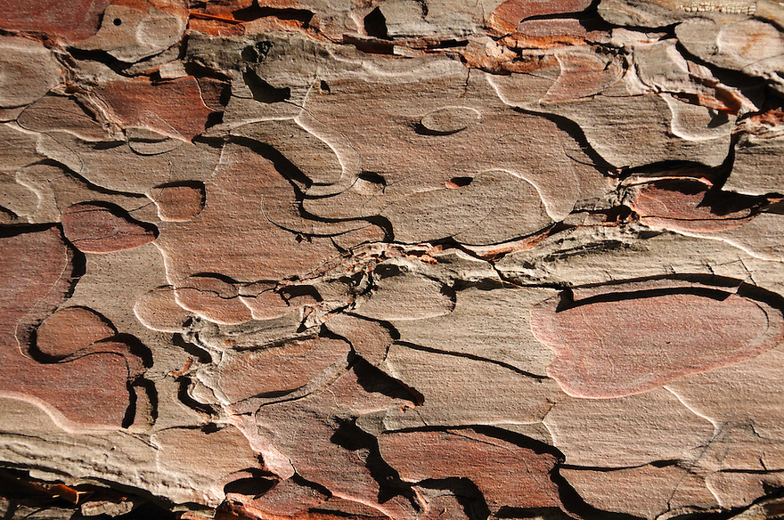 I love the color and texture of Red Pine bark.