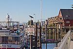 La Conner, Waterfront Boardwalk, Heron, Swinomish Channel,  Skagit County, Washington State,