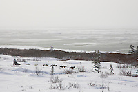 Cim Smyth runs on the trail with the Bering Sea in the background six miles after Unalakleet on Monday during Iditarod 2008