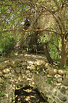 Israel, Ein Geres in Jerusalem mountains