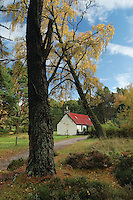 A Cottage in Autumn in Rothiemurchus, Cairngorm National Park, Highland<br /> <br /> Copyright www.scottishhorizons.co.uk/Keith Fergus 2011 All Rights Reserved