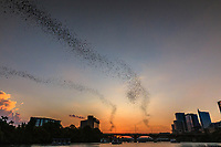 Austin's Congress Street bridge is famous for its bats. Mexican free-tailed bats emerge each summer evening from under the bridge, streaming their way along Lady Bird Lake and out into the Hill Country.<br /> <br /> This image was taken from the docks looking west as the sunset over Lady Bird Lake and the Zilker Park area.