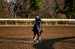 November 2, 2020: .Vequist, trained by trainer Robert E. Reid Jr., exercises in preparation for the Breeders' Cup Juvenile Fillies at Keeneland Racetrack in Lexington, Kentucky on November 2, 2020. Alex Evers/Eclipse Sportswire/Breeders Cup