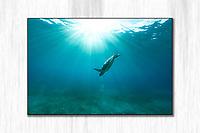 Turtle Light<br /> Green Sea Turtle descending through sunlit Caribbean waters