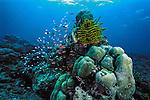 Coral Reef, Pulau Sipadan, Malaysia