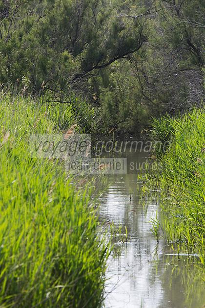 France/13/Bouches du Rhone/Camargue/Parc Naturel Régionnal de Camargue/Saintes Maries de la Mer: Le Marais camarguais au Parc ornithologique du Pont de Gau