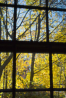 Yellow leaves on trees beyond silhouetted window