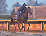 October 28, 2015 :   Swipe, trained by J. Keith Desormeaux and owned by Big Chief Racing LLC, exercises in preparation for the Sentient Jet Breeders' Cup Juvenile at Keeneland Race Track in Lexington, Kentucky on October 28, 2015. Scott Serio/ESW/CSM