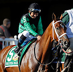 ARLINGTON HEIGHTS, IL - AUGUST 13: The Pizza Man #5, ridden by Mike E. Smith, during the post parade before Arlington Million at Arlington International Racecourse on August 13, 2016 in Arlington Heights, Illinois. (Photo by Jon Durr/Eclipse Sportswire/Getty Images)
