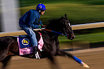 APRIL 29, 2015: Condo Commando, trained by Rudy Rodriguez, exercises in preparation for the 141st Kentucky Oaks at Churchill Downs in Louisville, Kentucky. Jon Durr/ESW/Cal Sport Media