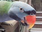 Parrots & Macaws