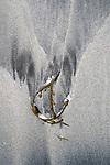 Lofoten, Norway , beach abstract