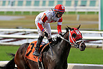 January 16, 2016: International Star with Miguel Mena wins the Louisiana Stakes race at the Fairgrounds race course in New Orleans Louisiana. Steve Dalmado/ESW/CSM