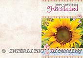 Alfredo, FLOWERS, paintings, BRTOCH40566CP,#F# Blumen, flores, illustrations, pinturas