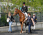 LEXINGTON, KY - APRIL 28: #10 Bango and rider Tim Price from New Zealand leaving the stadium after their Dressage test in the Rolex Three Day Event, Dressage Day 1, at the Kentucky Horse Park in Lexington, KY.  April 28, 2016 in Lexington, Kentucky. (Photo by Candice Chavez/Eclipse Sportswire/Getty Images)