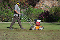 Scarifying the lawn in the top courtyard, Sissinghurst, late September.