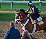 MAY 14, 2015: Tale Of Verve exercises in preparation for the Preakness Stakes as trainer Dallas Stewart watches at Pimlico Race Course in Baltimore, Maryland.  Scott Serio/ESW/Cal Sport Media