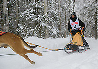 A musher passes a checkpoint in Anchorage's Bicentenial Park during the Fur Rondy Open World Championship Sled Dog Race