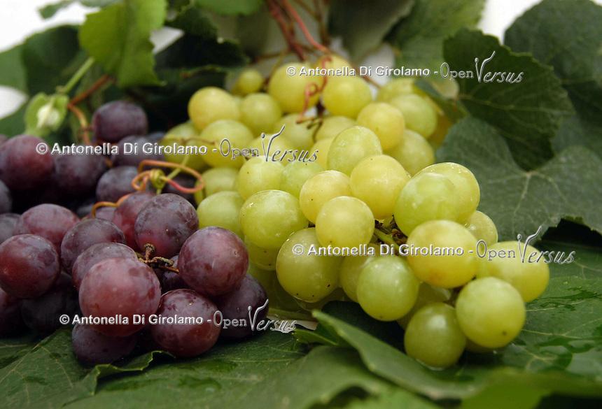 Grappoli di uva da tavola..Bunches of table grapes...