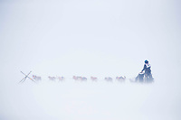 Justin Stielstra and team runs on the trail in 20 mph wind with snow blowing across the trail 5 miles from Nome during the 2017 Iditarod on Friday March 17, 2017.<br /> <br /> Photo by Jeff Schultz/SchultzPhoto.com  (C) 2017  ALL RIGHTS RESERVED
