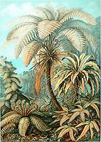 Filicinae (Ferns), by Ernst Haeckel, 1904