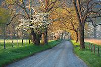 Spring along Sparks Lane, Cades Cove